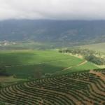 Coffee_Plantation